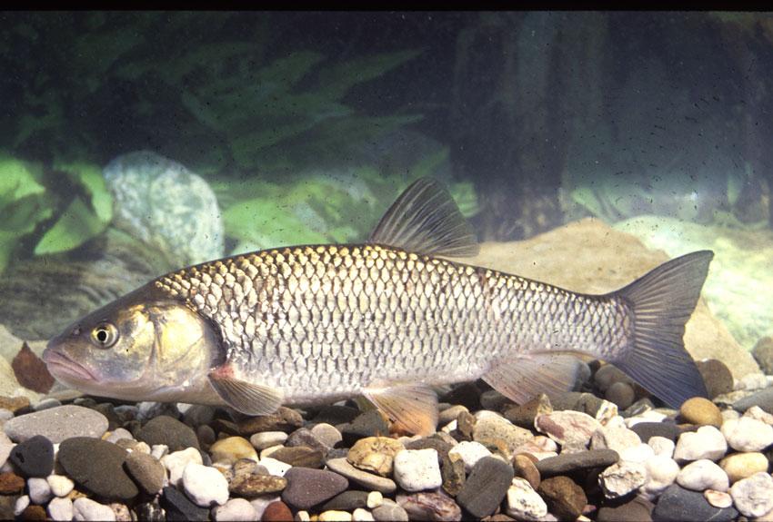 Fische schwimmen am Boden - Aquarium Forum