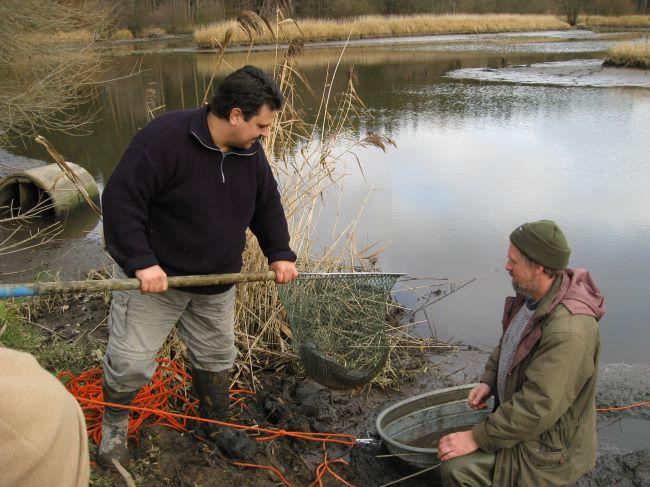 Neudeser teich bund naturschutz in bayern e v for Fischbesatz teich